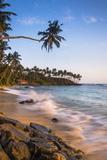 Palm Tree  Mirissa Beach  South Coast of Sri Lanka  Sri Lanka  Asia