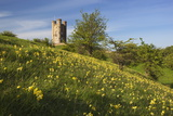 Broadway Tower with Cowslips  Broadway  Worcestershire  England  United Kingdom  Europe