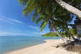 Palm Trees Overhanging Bangrak Beach  Koh Samui  Thailand  Southeast Asia  Asia