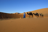 Moroccan Camel Driver