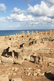 Goats Going into the Bath House Ruins  Apollonia  Libya  North Africa  Africa