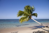 Las Terrenas  Samana Peninsula  Dominican Republic  West Indies  Caribbean  Central America