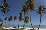Punta Cana  Dominican Republic  West Indies  Caribbean  Central America