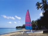 Sailing Boat on Paynes Bay  Barbados  Caribbean