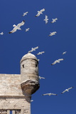 Seagulls Flying Above Turret of the Old Fort