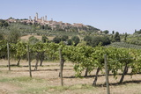 Vineyard with San Gimignano in Background  Tuscany  Italy