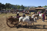 Thaung Tho Tribal Market at Southern End of Lake  Inle Lake  Shan State  Myanmar (Burma)  Asia