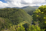 Forested Terrain  Plettenberg Bay  Garden Route  South Africa  Africa