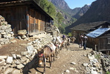 Mule Train Between Phakding and Namche  Everest Base Camp Trek  Solukhumbu  Nepal  Himalayas  Asia