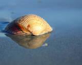 Shell Reflection I