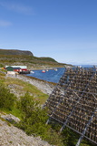 Cod Drying on Traditional Drying Racks  Nordkapp  Finnmark  Norway  Scandinavia  Europe