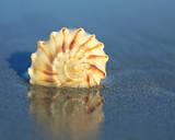 Shell Reflection II