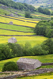 Field Barns in Buttercup Meadows Near Thwaite in Swaledale