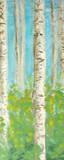 Vibrant Birchwood II