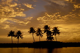 Sunset over the Backwaters  Alleppey  Kerala  India  Asia