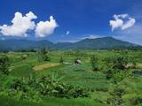 Rice Terrace  Minangkabau  Sumatra  Indonesia