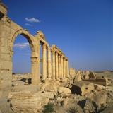Classical Columns  Palmyra  Syria