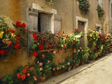 Exterior of a Rustic House Covered with Flowers  Landes  Aquitaine  France