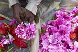 Mullik Ghat Flower Market  Kolkata (Calcutta)  West Bengal  India  Asia