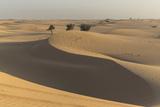 The Desert Near Liwa  Abu Dhabi  United Arab Emirates  Middle East
