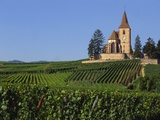 Church and Vineyards  Hunawihr  Alsace  France