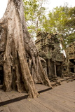Temple of Ta Prohm  Angkor  UNESCO World Heritage Site