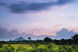 Sri Lanka Landscape at Sunrise  Paddy Fields Near Dambulla  Central Province  Sri Lanka  Asia