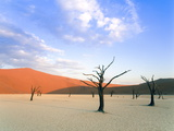 Dead Trees and Orange Sand Dunes