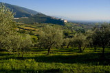 Distant View of the Church of San Francesco  Assisi  Umbria  Italy  Europe