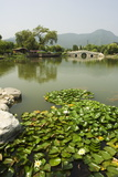 Lily Pads and a Arched Stone Bridge in Beijing Botanical Gardens  Beijing  China  Asia