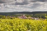 Champagne Vineyards Above the Village of Landreville in the Cote Des Bar Area of Aube