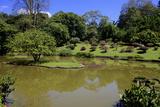 Royal Botanical Gardens  Peradeniya  Kandy  Sri Lanka  Asia