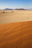 Animal Tracks in Sand  Namib Desert  Namibia  Africa