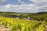 Champagne Vineyards Above the Village of Viviers Sur Artaut
