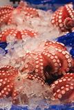 Octopus at Tsukiji Fish Market  Tokyo  Honshu Island  Japan  Asia