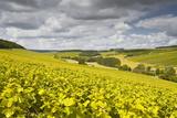 Champagne Vineyards Above the Village of Viviers Sur Artaut