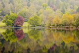 Trees Reflected in the Still Waters of Grasmere in the Lake District National Park