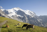 Jungfrau  Kleine Scheidegg  Bernese Oberland  Berne Canton  Switzerland  Europe