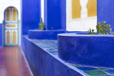 The Majorelle Gardens  Marrakech  Morocco  North Africa  Africa