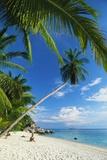 Three People Sunbathing on the Beach of Terengganu  Perhentian Besar  Malaysia