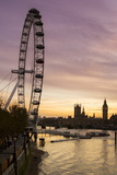 Victoria Tower  Big Ben  Houses of Parliament and London Eye Overshadow the River Thames at Dusk