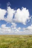Salt Meadow (Salt Marshes)