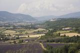 Sault En Provence  Vaucluse  Provence  France  Europe
