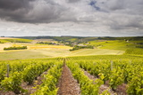Champagne Vineyards Above the Village of Noe Les Mallets in the Cote Des Bar Area of Aube