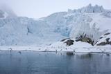 Gulls Fly Up in Front of Glacier  Spitzsergen  Svalbard  Norway  Scandinavia  Europe
