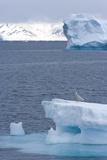 Young Great Skua (Stercorarius Skua) on Iceberg  Spitsbergen  Svalbard  Norway  Scandinavia  Europe