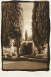 Poplar Trees  Italy