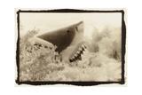 Shark Entryway Australia