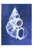 Wentletrap Shell (indigo)