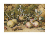 Still Life with Apples  Hazelnuts and Rosehips